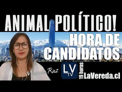 Hora de Candidatos en Animal Político con Marcela Ruz