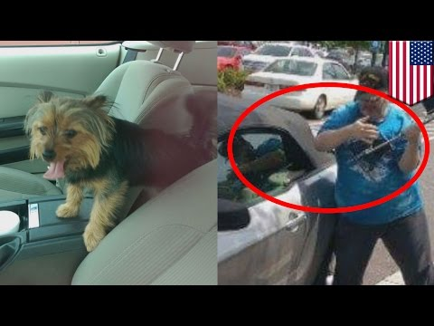 Dog rescue: Veteran breaks car window to save dog from hot Mustang and gets arrested - TomoNews