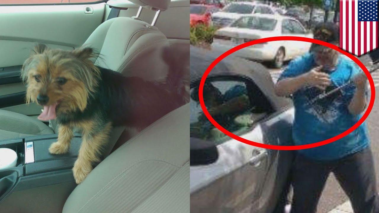 Report Dog Left In Hot Car