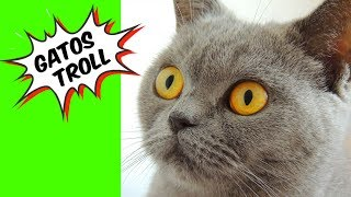 It's not Roblox-ESCAPE from the TROLL CATS (LOLCat Escape) #JogosGrátis