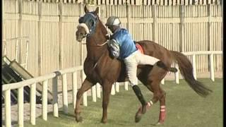 Les Coulisses Du Turf    Les Risques Du Metier De Jockey