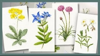BOTANICAL ART   Technique tips and ideas from a recent commission