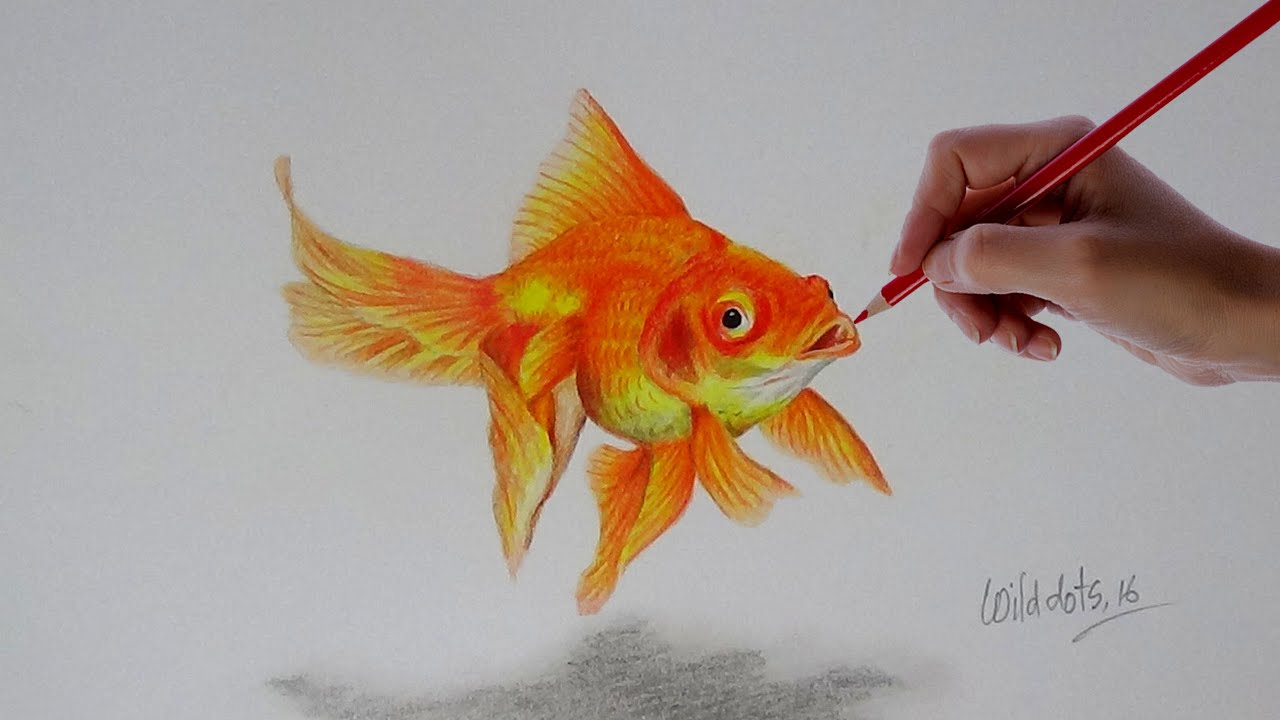 gold fish a realistic drawing with simple colored pencils youtube