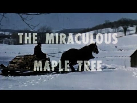 Vermont Maple Sugaring 1966