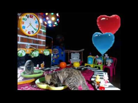 Cats Meok Bang : Stray Cats in South Korea[팝콘티비 BJ도둑고양이 나비월드] 160917 쪼쪼 오후7시20