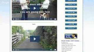 Best Dog Training Singapore - The Online Dog Trainer