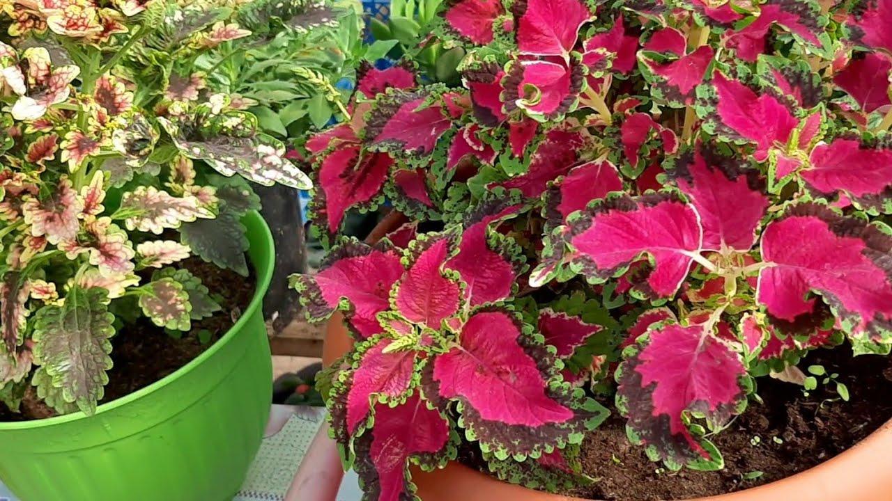Как Укоренить Цветы Осенью ЛЕГКИЙ СПОСОБ Как укоренить черенки комнатных цветов осенью