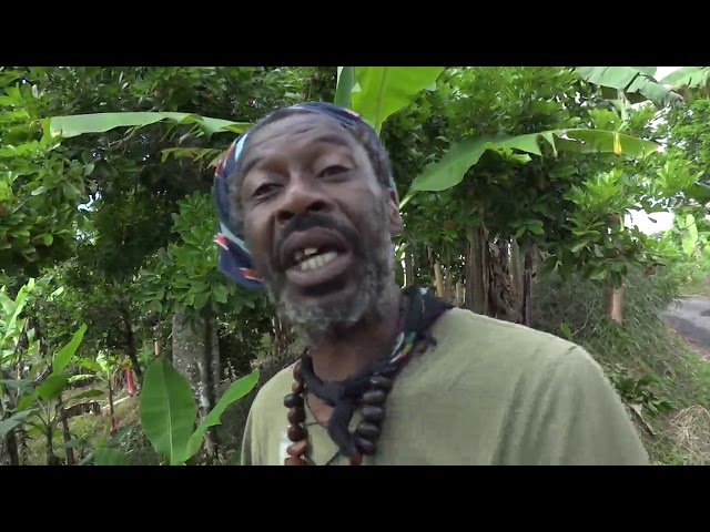 Can A Digital Economy Be The Norm For Jamaica? - PART TWO | Beyond the Crisis  | CVMTV