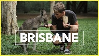 AUSTRALIA ZOO! | Work And Travel Australien #2