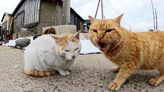 テトラポットの隙間からツンデレな猫達がワラワラと集まってきた