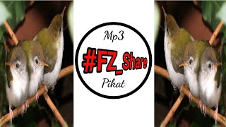 Mp3 Pikat Call Anak Prenjak Jernih Pikatan Ampuh #Catch #Trap #Bird