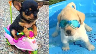 Baby Dogs  Cute and Funny Dog Videos Compilation #3   Funny Puppy Videos 2021