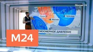"""""""Климат-контроль"""": какая погода ждет москвичей в ближайшее время - Москва 24"""