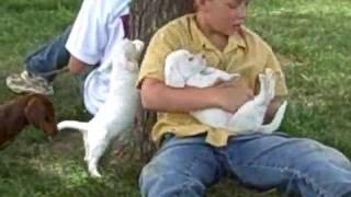 Weepoos 6-18-09 Www.doubledpuppies.com