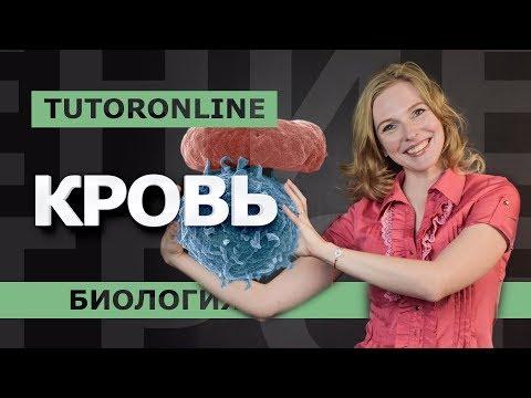Биология| КРОВЬ