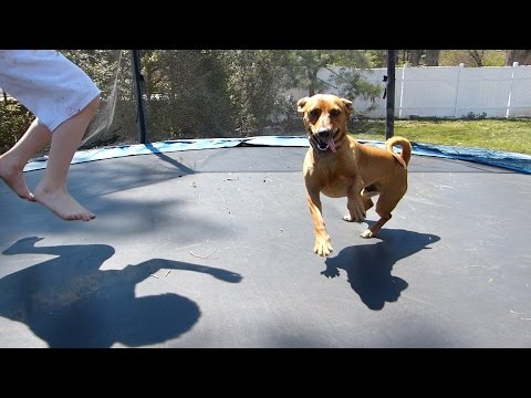 Dogs jumping on the trampoline!