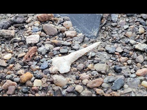 Download Arrowhead Hunting 2021