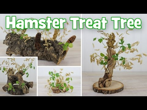 Natural Hamster Treat Trees DIY by Hammy Time