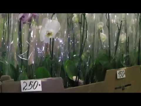 Орхидеи. Много цветов, не дорого. 17 сентября Садовод