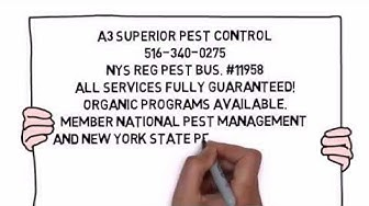 Rockville Centre NY Pest Control | Pest Control in Rockville Centre New York