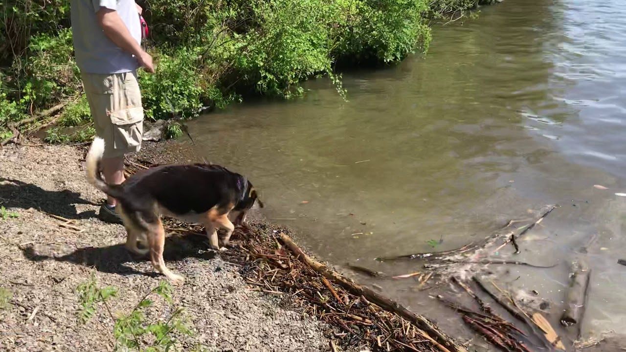 Download Penny Tests The River