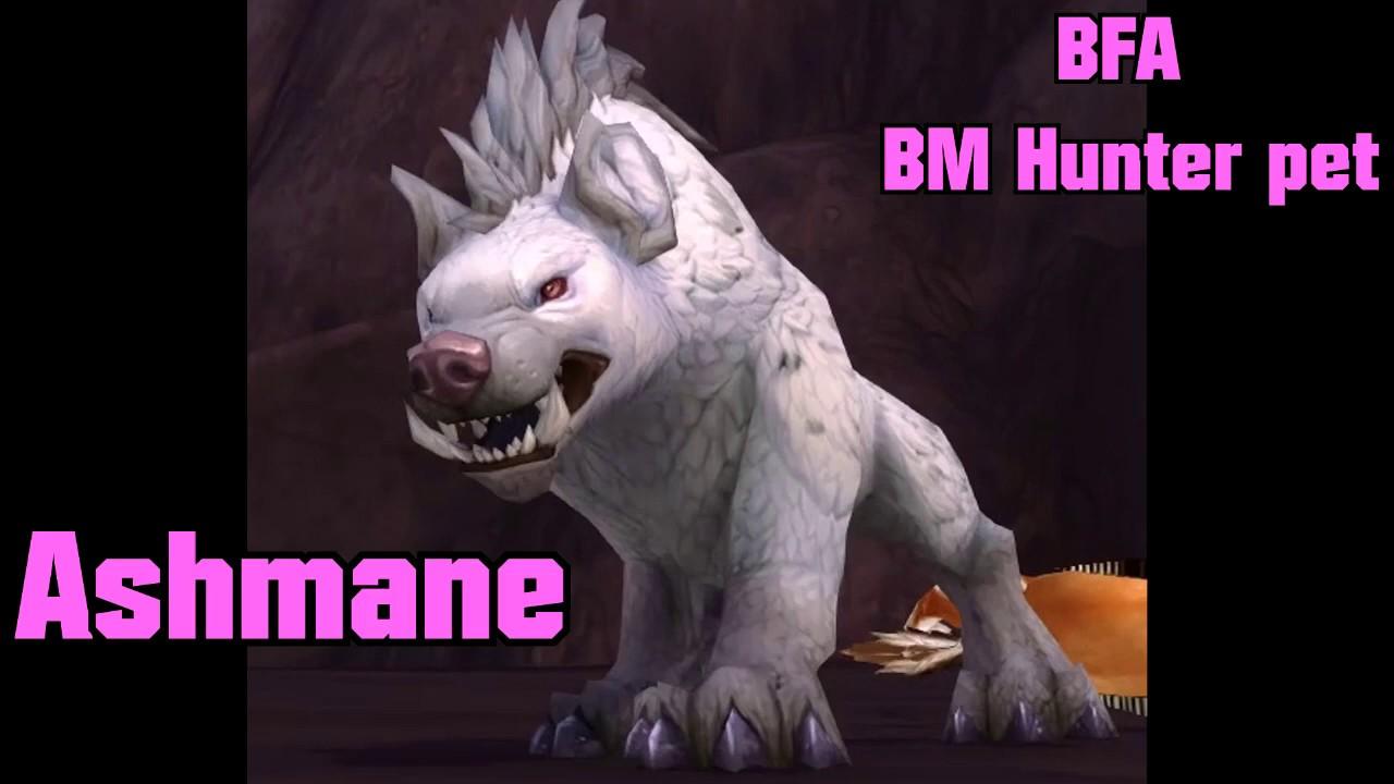 Wow Battle For Azeroth Bm Hunter Tamable Hyena Rare In Vol Dun Ashmane Youtube