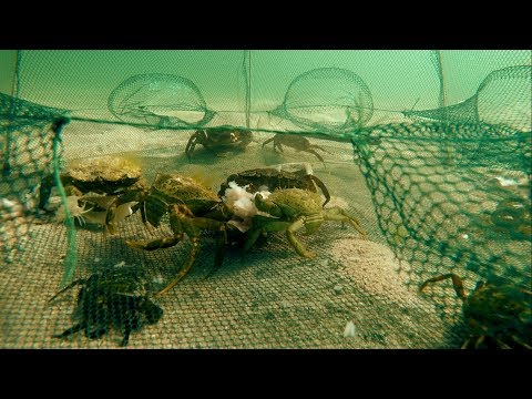 POV camera in 6 holes Crab Trap in Atlantic Ocean, Connemara, Ireland. Uncut. Ловушка для крабов.