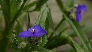 видео Вересковый Сад в Ландшафтном Дизайне Фото / Ландшафтный дизайн