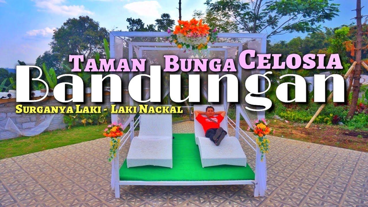 Wisata Taman Bunga Celosia Bandungan Kabupaten Semarang Recomended Untuk Prewedding Full View