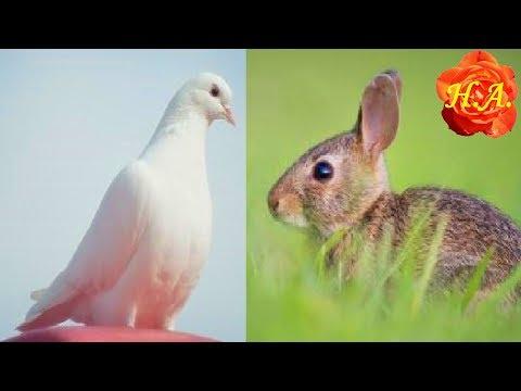 Болезни кроликов и симптомы, по которым их можно распознать