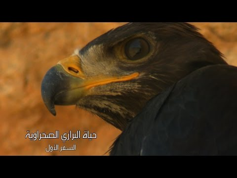AmouddouTV 108 أمودو/ حياة البراري الصحراوية