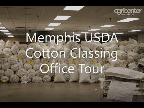 USDA Cotton Classing In Memphis