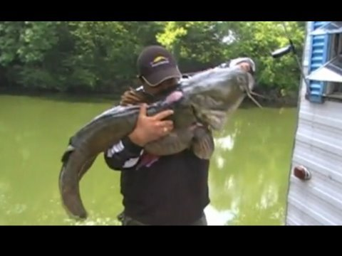 Italy: Is this the BIGGEST catfish ever caught by man? from YouTube · High Definition · Duration:  41 seconds  · 1,011,000+ views · uploaded on 2/26/2015 · uploaded by Ruptly TV