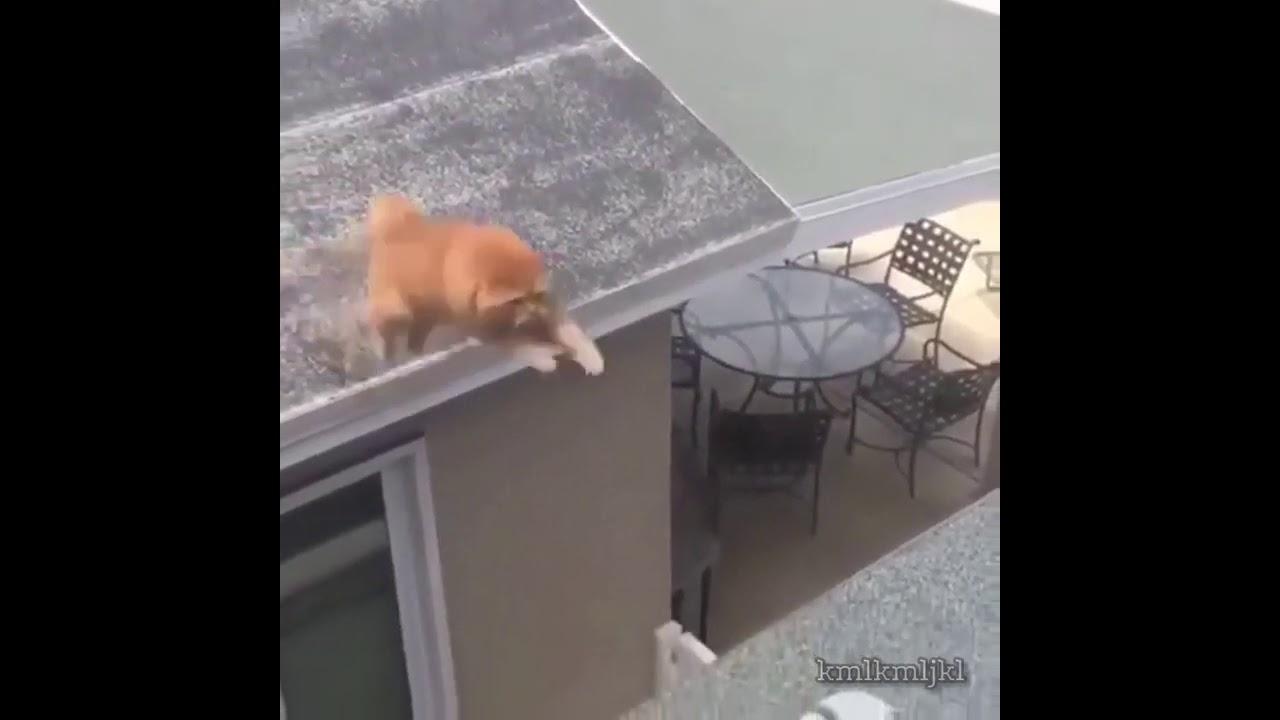 cat tries tiktok trend
