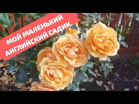 Как будет роза по английски