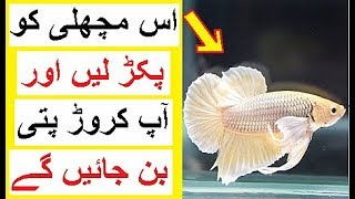 Catch this Fish and Become a Millionaire  - Most Expensive Animals