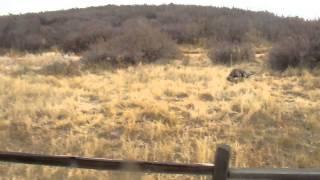 Winnie, Our Weimaraner Running Around Bear Creek Park Jumping Fences