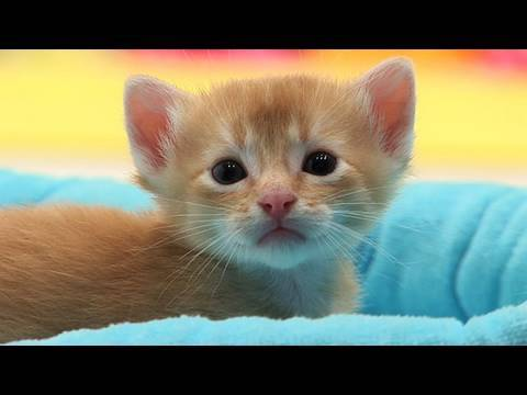 very cute cats youtube very cute cats voltagebd Gallery