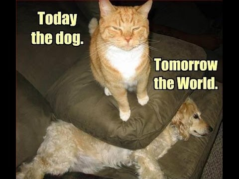 When Cats Rule The World