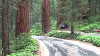 Tour: Driving through Sequoia National Park