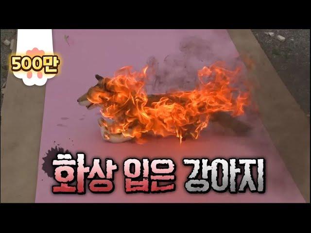살아있는 개에 불을 붙인 악마..