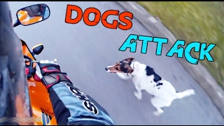 Dogs Attack Motorcycle Riders  \ Poor Dogs & Motorcyclist Rescues Dogs