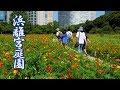 TOKYO.Hama-rikyu Gardens in the Summer 浜離宮庭園. #4K