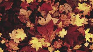 Vindsval - Music for the Autumn Equinox 2017 - 360 hz F# tuning!