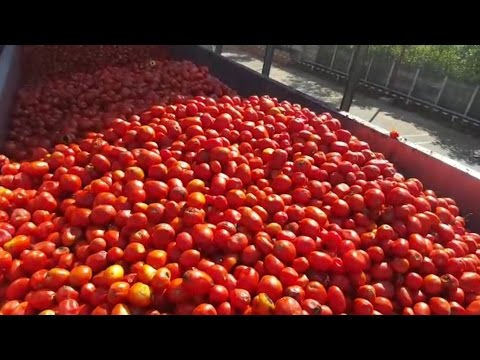 WATCH: We Take You Inside A Tomato Sauce Factory