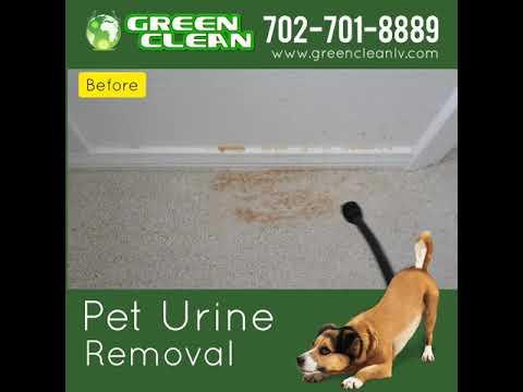 Las Vegas Carpet Cleaning Urine Removal Treatment