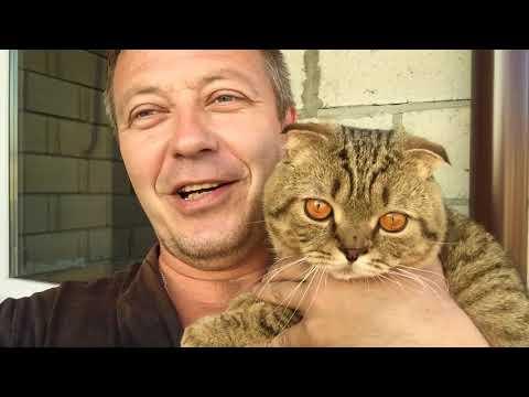 РЕАКЦИЯ ОРХИДЕЙНОГО КОТА НА КУР НЕСУШЕК! Кот впервые видит курочек  54