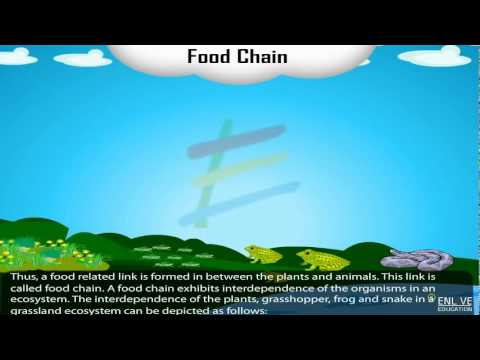 Download Food Chain