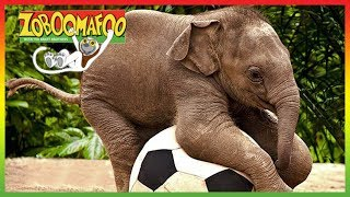 🐘 Zoboomafoo 243 | Talk to Me | Animal shows for kids | Full Episode | HD 🐘