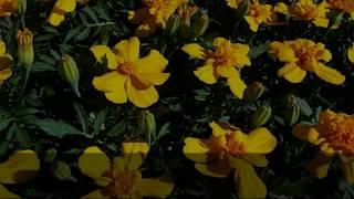 Artykuły ogrodnicze sklep ogrodniczy Kochaniuk Elżbieta artykuły ogrodniczo-przemysłowe